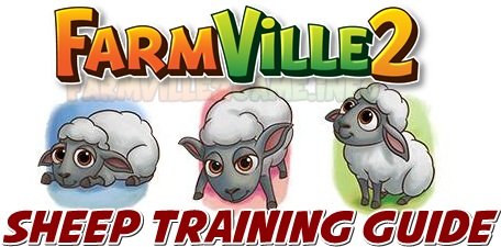 Sheep Training Guide