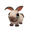 Sealpoint Dwarf Rabbit