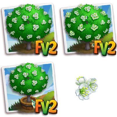 Evodia Tree
