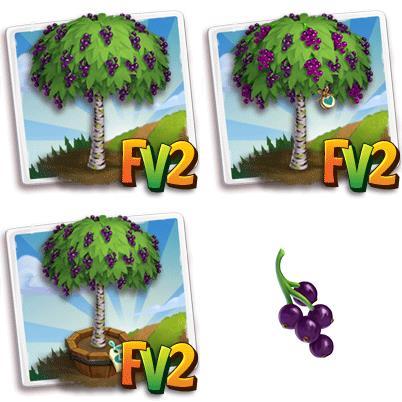 Amazon Grape Tree