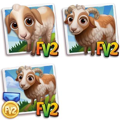 Damara Sheep