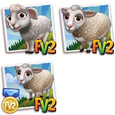 White Dorper Sheep