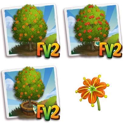 Firewheel Tree