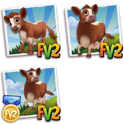 Irish Moiled Mini Cow