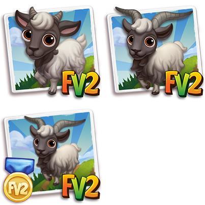 Bagot Mini Goat