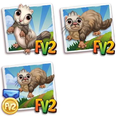 Badger Ferret