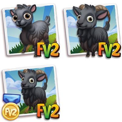 Uzbek Black Goat