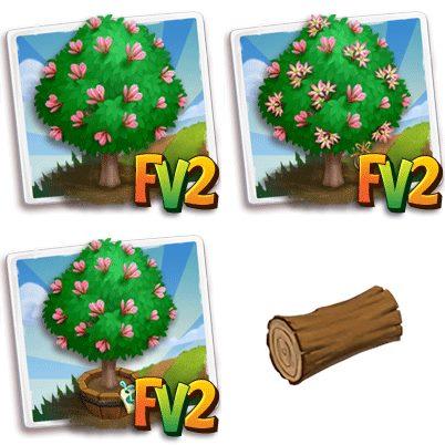 Coachwood Tree