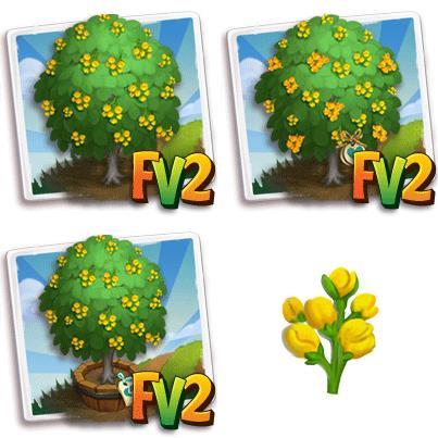 Burma Padauk Tree