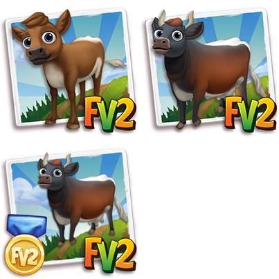 Gloucester Cow