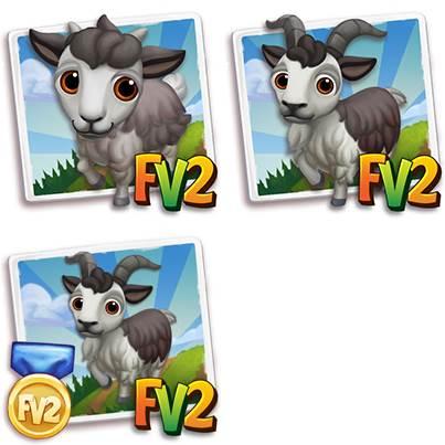 Valgerola Mini Goat