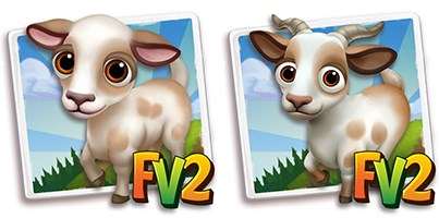 Barbari Mini Goat