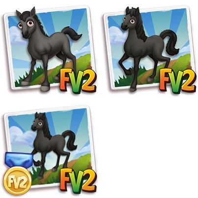 Black Lipizzan Horse