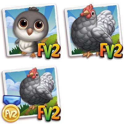 Favaucana Chicken