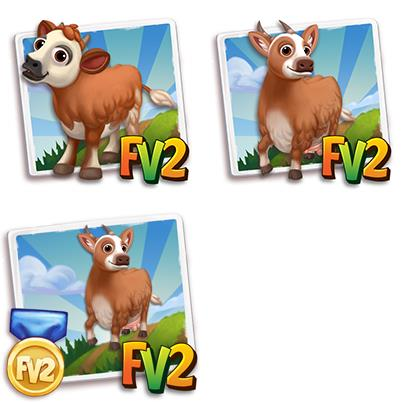 Kalmyk Mini Cow