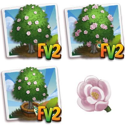 Sweet Michelia Tree